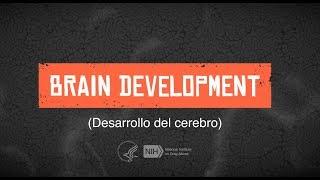 Desarrollo del Cerebro Adolescente