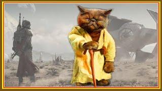 30 способов использования котов в хозяйстве.  Коты в фильме Звездные войны. Пробуждение Силы
