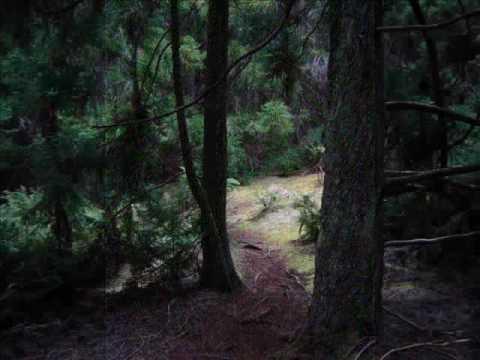 Maui Redwoods