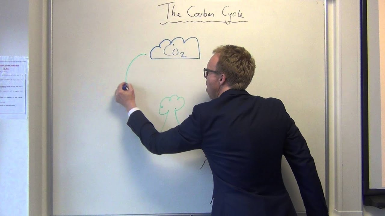 Simple carbon cycle youtube ccuart Choice Image