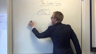 Simple carbon cycle