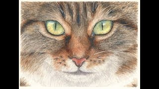 How to Paint a Realistic Cat Face in Watercolor