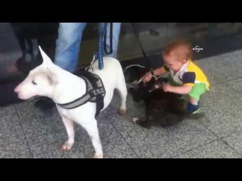 Havalimanında minik yolcunun köpek sevgisi