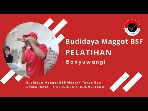 Pelatihan Budidaya Maggot BSF Semarang , Persiapan Kandang, Media, Telur, Bibit BSF