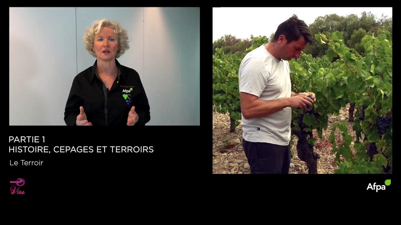 UA1 - Vidéo 4 -  Le terroir