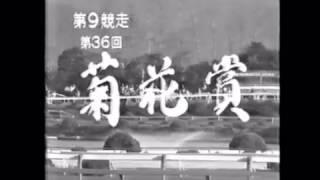 第36回菊花賞  コクサイプリンスが優勝