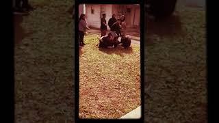 Girl fight San Antonio style 210