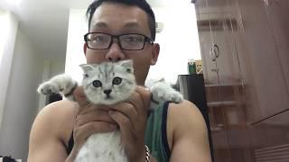 Nhật Ký Mèo Phò #4: Mèo Phò ăn gì mỗi ngày? #meopho #fourthecat #anuong