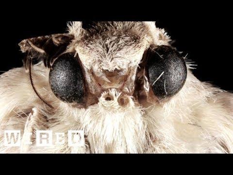 カメラのレンズは「蛾」の眼をマネて作られた!? | Think Like A Tree | WIRED.jp