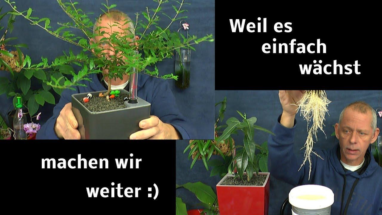 Pflanzen Einfach Wachsen Lassen Es Geht Spannend Weiter In Vielen