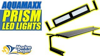 AquaMaxx Prism LED Lights: What YOU Need to Know