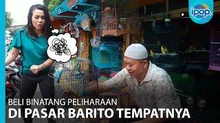 Di Pasar Barito, Bunda Bisa Temukan Berbagai Jenis Burung Peliharaan - IPOP