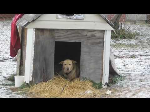 Pet LoveLy   Glenn Dorsey  Help a Cold Dog Sleep Safely Tonight