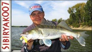 Да это лучшая Рыбалка в сезоне.. Ловля судака и щуки. Рыбалка осенью
