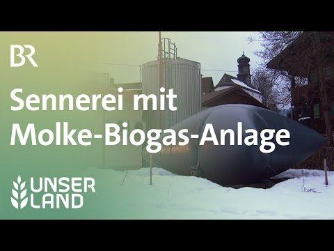 Wohin mit der Molke? Sennerei mit Biogas-Anlage | Unser Land | BR Fernsehen