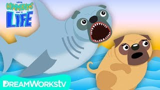 SHARK PUG Attacks REAL PUG!! | YOUR COMMENTS COME TO LIFE