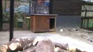 Promotie Stichting Animal LifeStyle