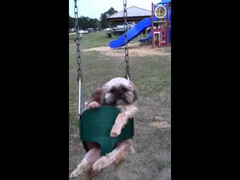 The swinging friends