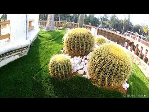 EKEN H8R 1080P RAW - Cactus at Floating Mosque Malaysia