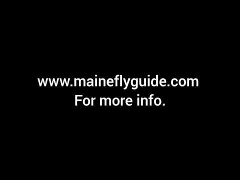Maine Fishing Guide, Androscoggin River And Head Waters SM Bass, Native Brook Trout, LL Salmon,