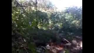 Download Video Pemerkosa tertangkap di hutan MP3 3GP MP4