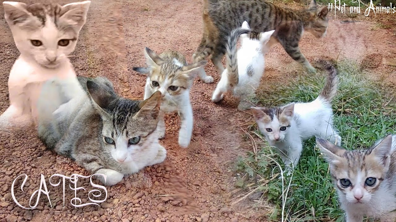 Download Cates playing - #pets_and_animals
