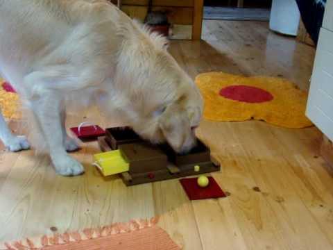 Dog Activity Poker Box