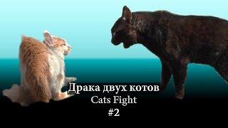 Драка двух котов #2
