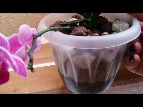 Полив орхидей в керамзите..как я поливаю..06.02.2020.