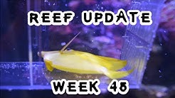 200 Gallon Reef aka The EX Wife, Week 45: Bad Times!