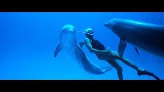 DOLPHIN MAN – documentary film teaser –Moving Docs