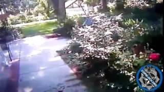 Topeka Kansas Officer Michael Cruse shoots 26lb dog Josie
