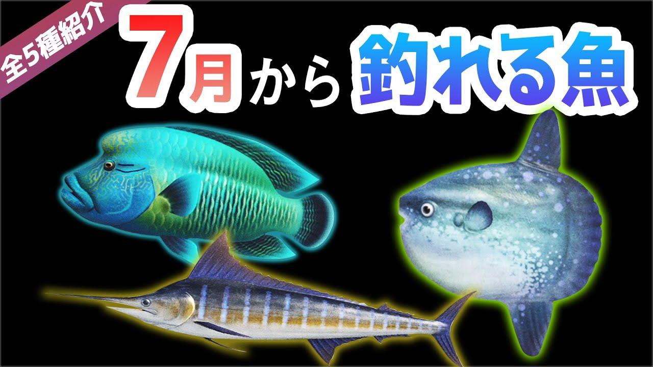 あつ森 7月 魚