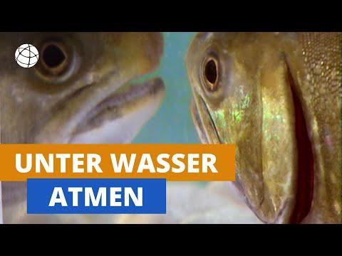 Matsyasana, der Fisch – Wirkungen der Asanas - YVS291из YouTube · Длительность: 9 мин42 с