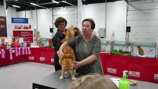 Смотреть видео Ларс 9 мес. Выставка Кот-Инфо 22-23.09.18 онлайн