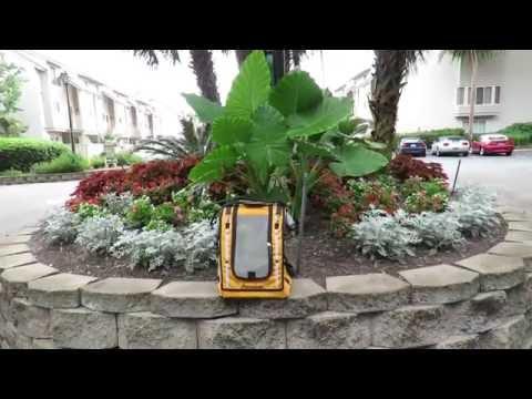 Freedom the Parrot & Super Tropical Plants Courtside Hilton Head Island, SC