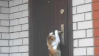 приколы Кошка открывает двери смотреть всем