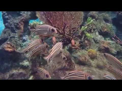 Phuket aquarium Thailand พิพิธภัณฑ์สัวต์น้ำภูเก็ต