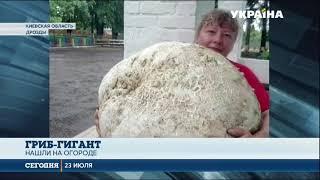 Гигантский гриб сорвали жители села в Киевской области