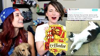 Sorting Your Cats into Hogwarts Houses ft. Brizzy Voices