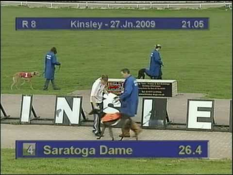 Saratoga Dame - Kinsley greyhounds