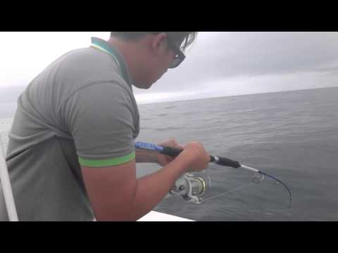 Kingfish Jigging At Long Reef, Sydney