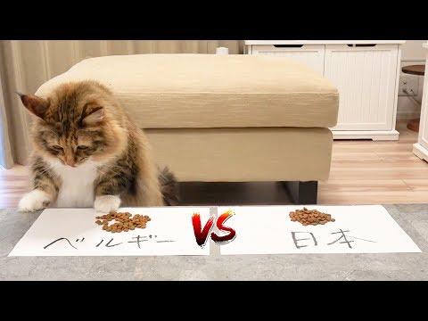 【サッカーW杯】猫が勝手に予想してみた。