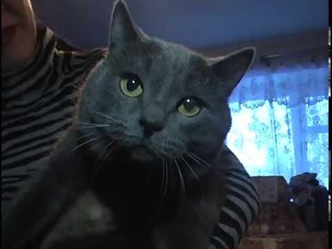 Вопрос: Чем могли отравить кошек во дворе Ваше мнение?