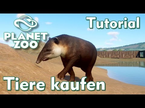 Planet Zoo Tutorial Tiere Kaufen Youtube