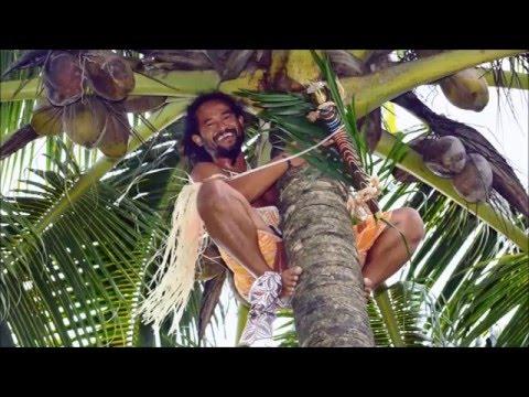 Coconut زراعة جوز الهند في الصحراء Youtube