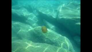 Feelium (Sandlands Demo) - The Smashing Pumpkins (Fan video)