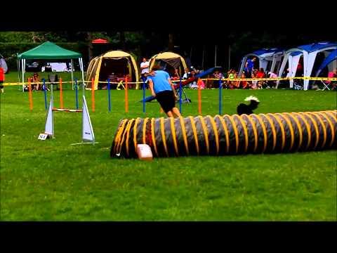 Dixie, agility competition KD Ilirija