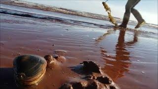 해수욕장 에서 골뱅이 조개 잡이 하러 갔을때 .. 거대 골뱅이 잡았음