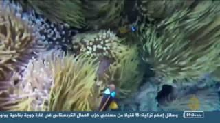 حملة أسترالية لحماية الشعاب المرجانية